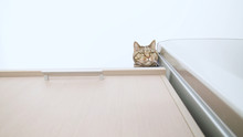 Cute Cat Head Peek Over The Ed...