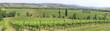 Weinanbau in Hügellandschaft, Toskana, Italien, Europa, Panorama