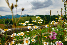 Nature And Flowers, Beautiful ...