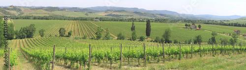 Fotografering Weinanbau in Hügellandschaft, Toskana, Italien, Europa, Panorama