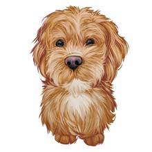 Labradoodle Dog Digital Art Illustration Of Cute Canine Animal. Crossbreed Dog Created By Crossing Labrador Retriever And Standard, Miniature, Or Toy Poodle Hand Drawn Portrait, Puppy Muzzle.