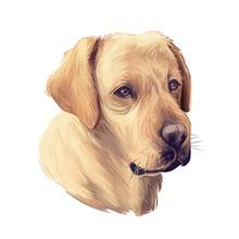 Tan Labrador Retriever Portrait Of Purebred Digital Art Illustration. Canadian Mammal Gun Dog, Hunting Breed. Doggy Closeup Drawing, Puppy Lab With Large Ears, Canine Hand Drawn Animal Pedigree Pet.