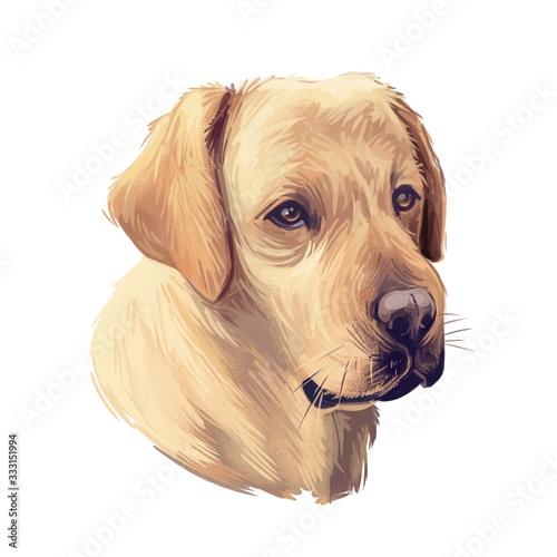 Obraz na płótnie Tan labrador retriever portrait of purebred digital art illustration