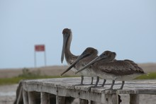 Pelicans Group