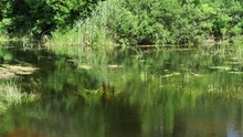 Nature On The River Green Vege...