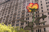 Fototapeta Nowy Jork - róża
