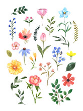Watercolor Wild Flowers Set. H...