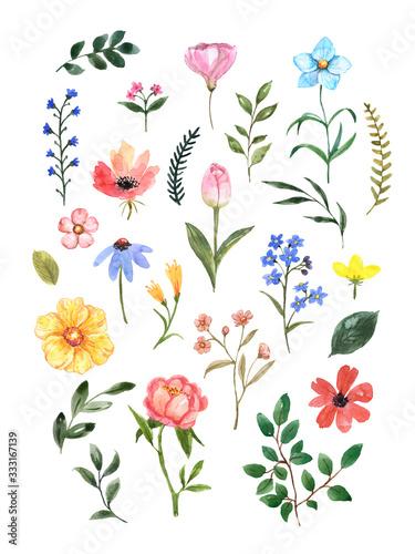 Fototapeta Watercolor wild flowers set