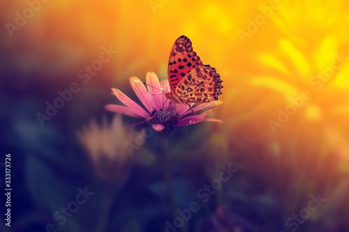 Obraz butterfly on flower - fototapety do salonu
