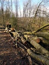Reste Eines Gefällten Baum Im Sonnenschein An Der Himmelsleiter In Oerlinghausen Am Hermannsweg Bei Bielefeld Im Teutoburger Wald In Ostwestfalen-Lippe