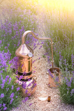 Distilling Apparatus Alembic With Esential Oil Between Of Lavender Field Lines. Illustration Of Essetial Oil Distillation.