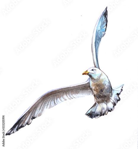 Obraz na plátne Watercolor  Albatross bird animal on a white background illustration