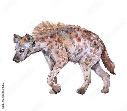Fotografia, Obraz Watercolor hyena animal on a white background illustration