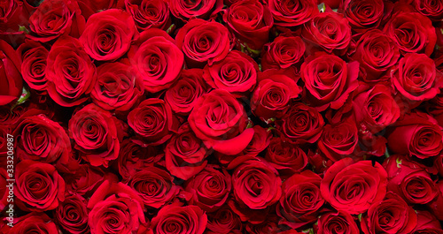 Foto roses background