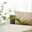 Spring time and wooden desk in home interior with blurred window.