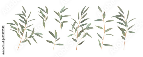 Fototapeta Set different branches of Eucalyptus radiata isolated on a white background. Vector illustration of greenery, foliage and natural leaves. Design element for floral composition and bunch obraz