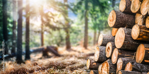 Forest pine and spruce trees. Log trunks pile,  the logging timber wood industry. Wide banner or panorama wooden trunks. - 333211929