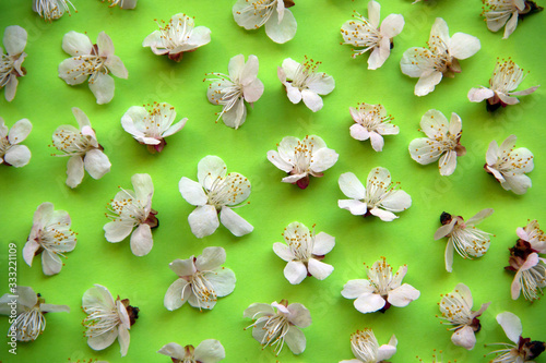 Creative layout pattern with spring flowers of fruit trees on a green background. Nature flat lay. Minimal spring concept.