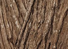 Brown Of Tree Wood Bark Backgr...