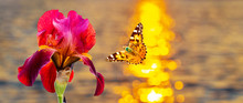 Butterfly Flies To Red Flower ...