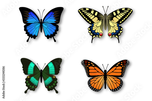 set of colorful butterflies Canvas Print