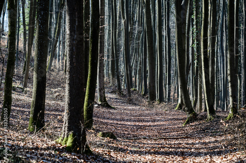 A footpath in an autumnly forest Canvas Print
