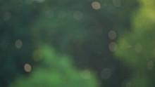 Beautiful Nature Video Bokeh Background Of Blurry Sunset Landscape And Defocused Round Particles Of Poplar Pollen Flying All Around Air In Evening.