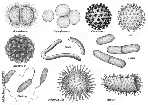 Photo infectious bacteria and virus collection illustration, drawing, engraving, ink,