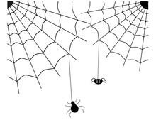 Spiders Knit A Spider Web.Illu...