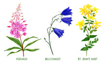 Wild Field Plants And Flowers ...