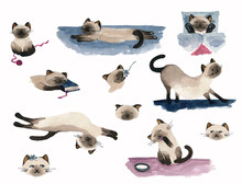 Set Of Watercolor Siamese Cats