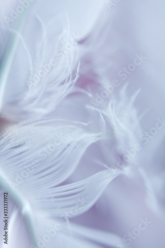 Beautiful soft feathers background texture. LIgth violet and purple our of focus texture.