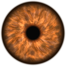 Brown Isolated Human Eye Iris