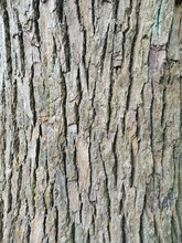 Closeup Photograph Of Tree Tru...