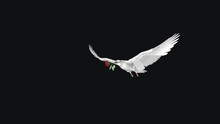 White Dove With Red Rose Flowe...