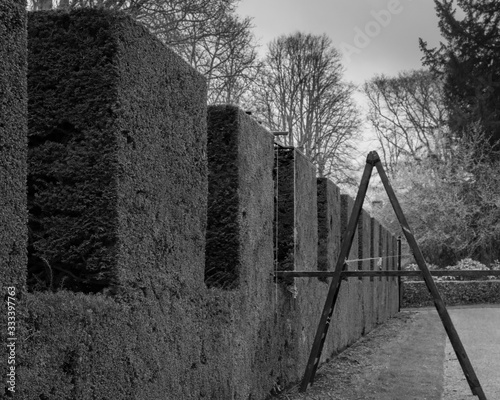 Trimming hedges in a French garden (black and white)