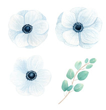 Anemone Watercolor Isolated On...