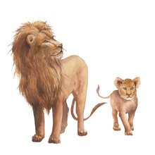 Watercolor Lion Family. Wild A...