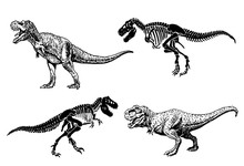 Graphical Set Of Dinosaurs Isolated On White Background,vector Illustration,paleontology