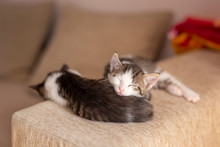 Kittens Sleeping On The Couch