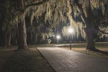 Mossy Oak Trees In Green Summer Park. Jekyll Island, Georgia, USA