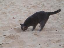 A Dark Gray Cat Sniffs The San...
