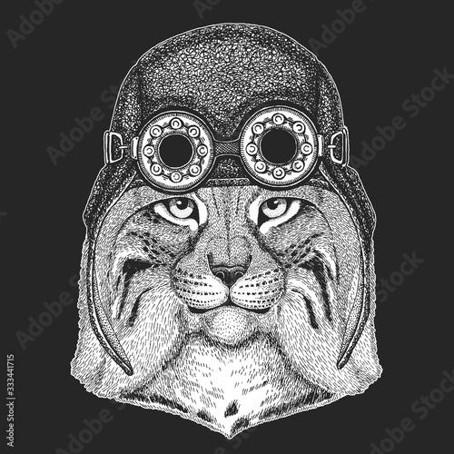 Photo Lynx, bobcat, trot portrait