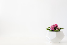 A Single Green Plant Against A Blank White Wall. Copy Space. Plant With Pink Flowers In A Geometric Pot. An Isolated Object.
