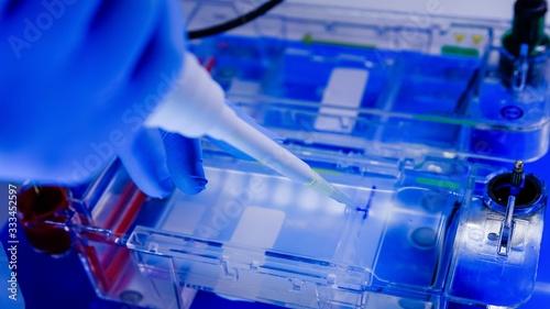 Fotografie, Obraz Scientist conducting the gel electrophoresis biological process as part of coron