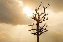 Silhouette Dead Dry Tree Isola...