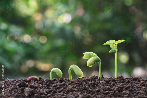 Young plants growing  from seed step up  in nature background with The fertile soil Canvas