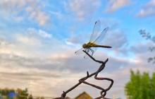 Dragonfly On Blue Sky Background