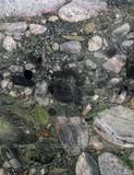 tree trunk slab green marble texture - 333485369