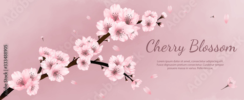 Obraz na plátně Banner flowers cherry blossoms watercolor ,spring , summer with pink background